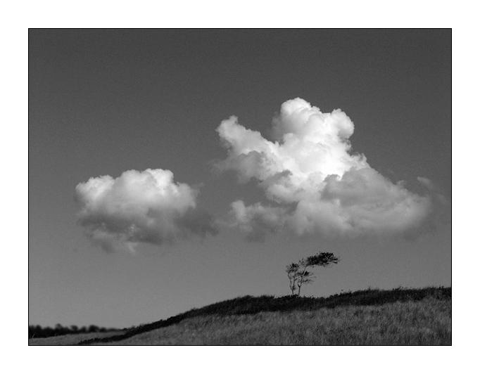 Windflüchter mit Wolke