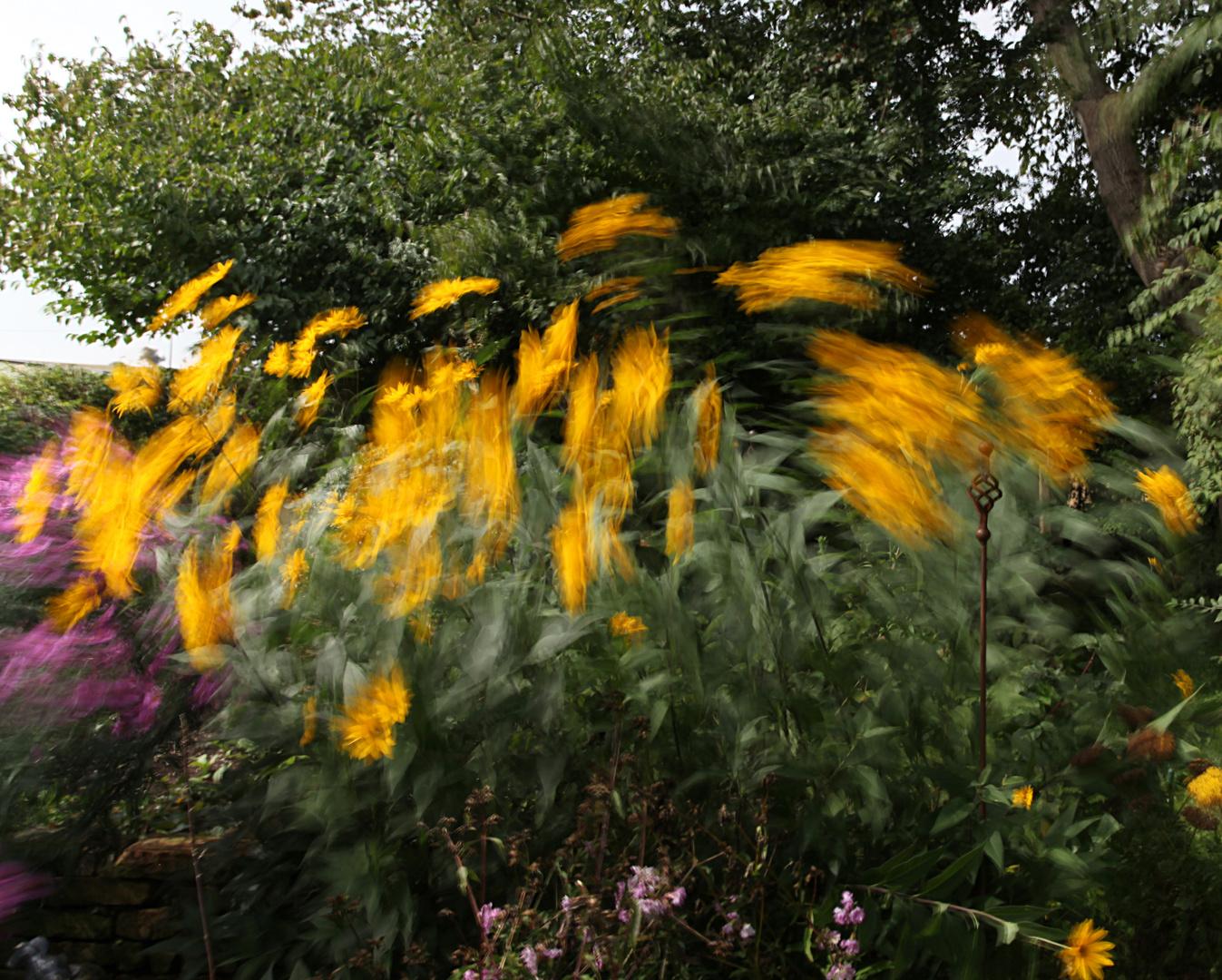 Windgarten