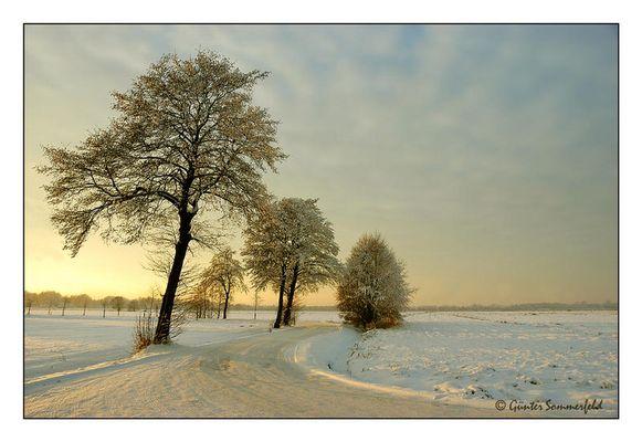 Windgepeitschte im Schnee