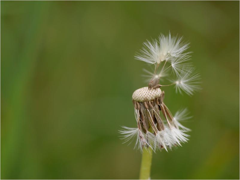 WindGerichtet