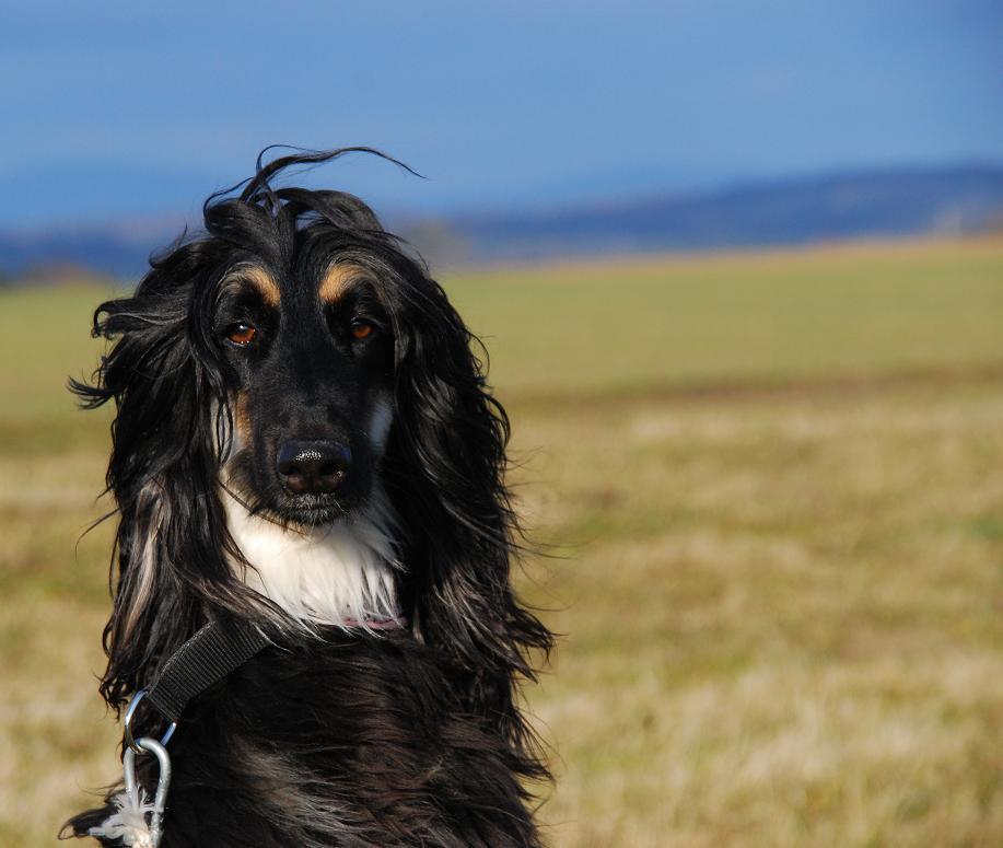 WINDhund...