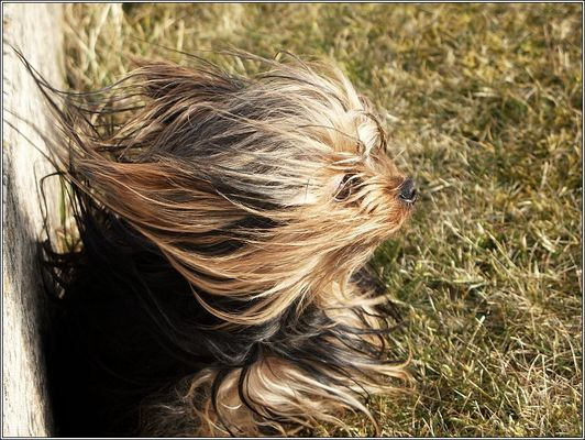 Windhund :-)