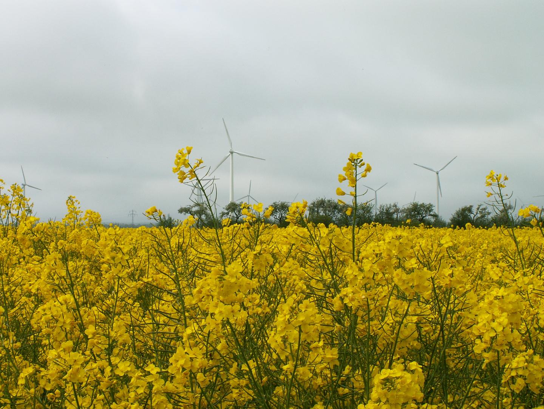 Windkraft im Einklang mit der Natur...
