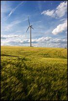 Windkraftwerk im Kornfeld