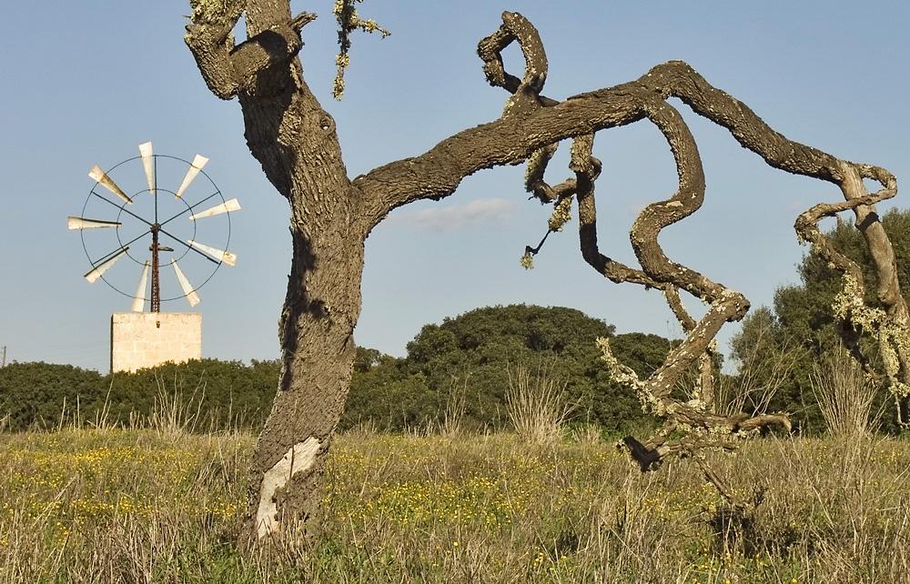 Windmühle bei Campos