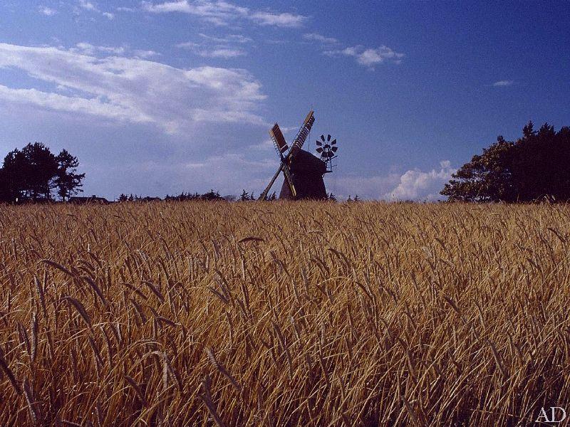 Windmühle bei Nebel auf Amrum
