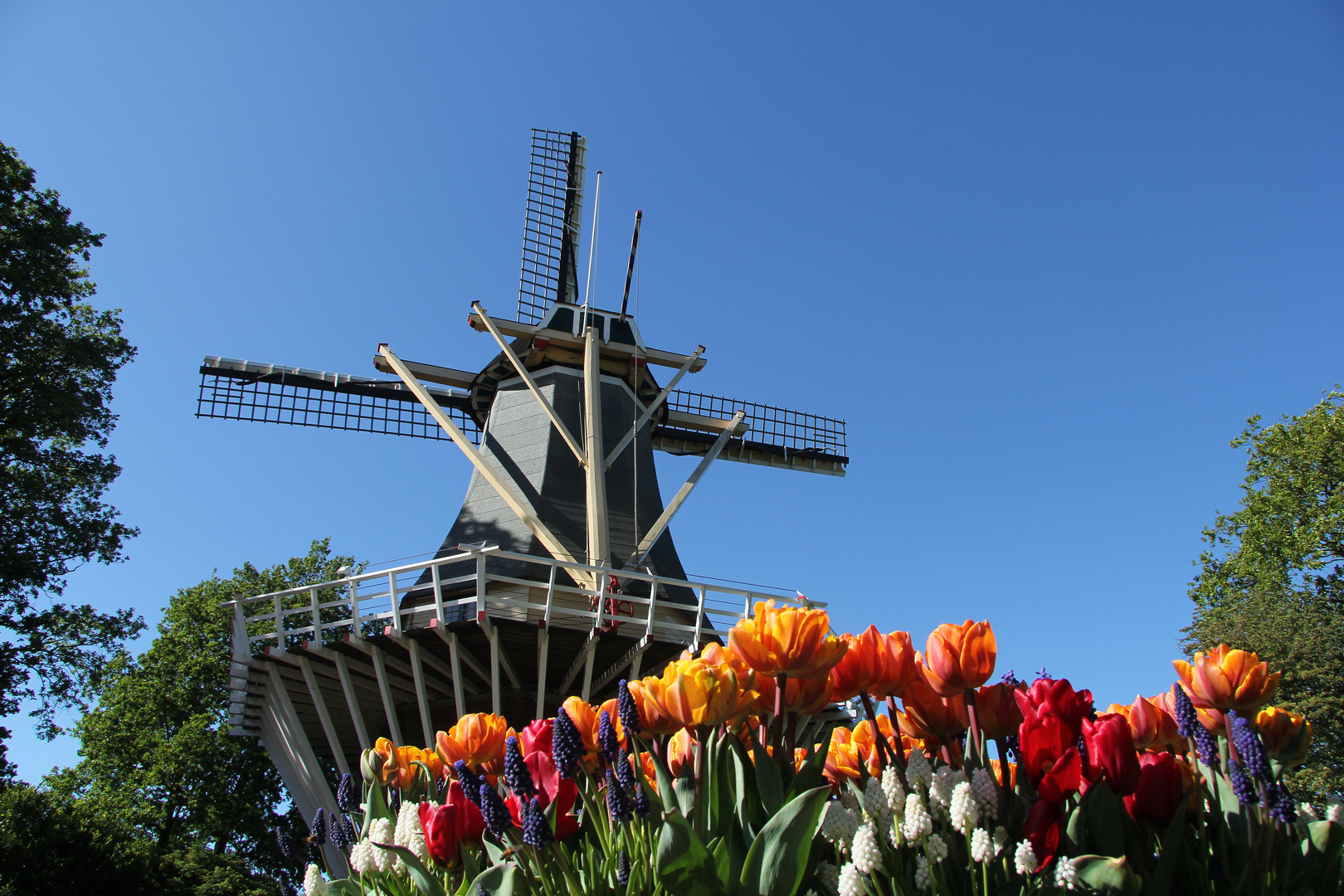 Windmühle im Keukenhof