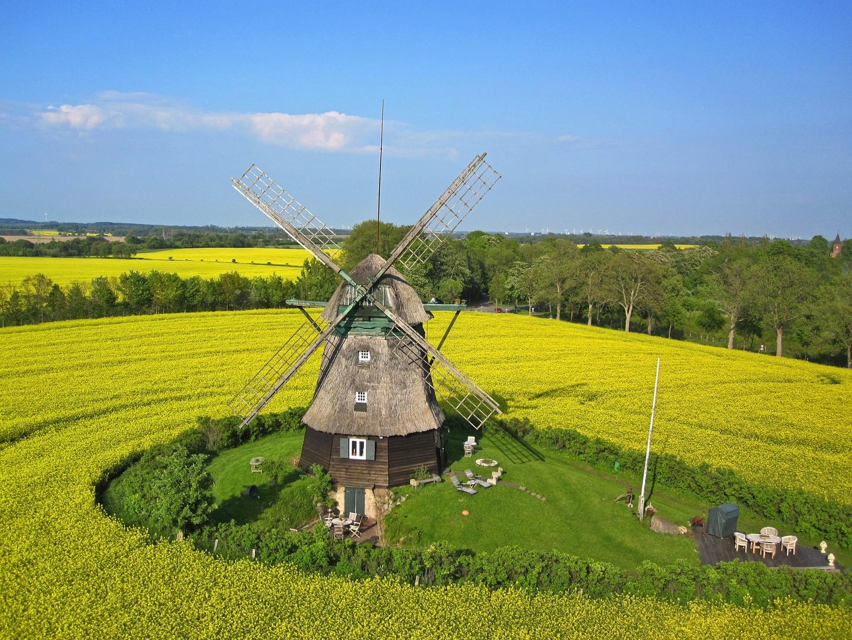 Windmühle im Rapsfeld