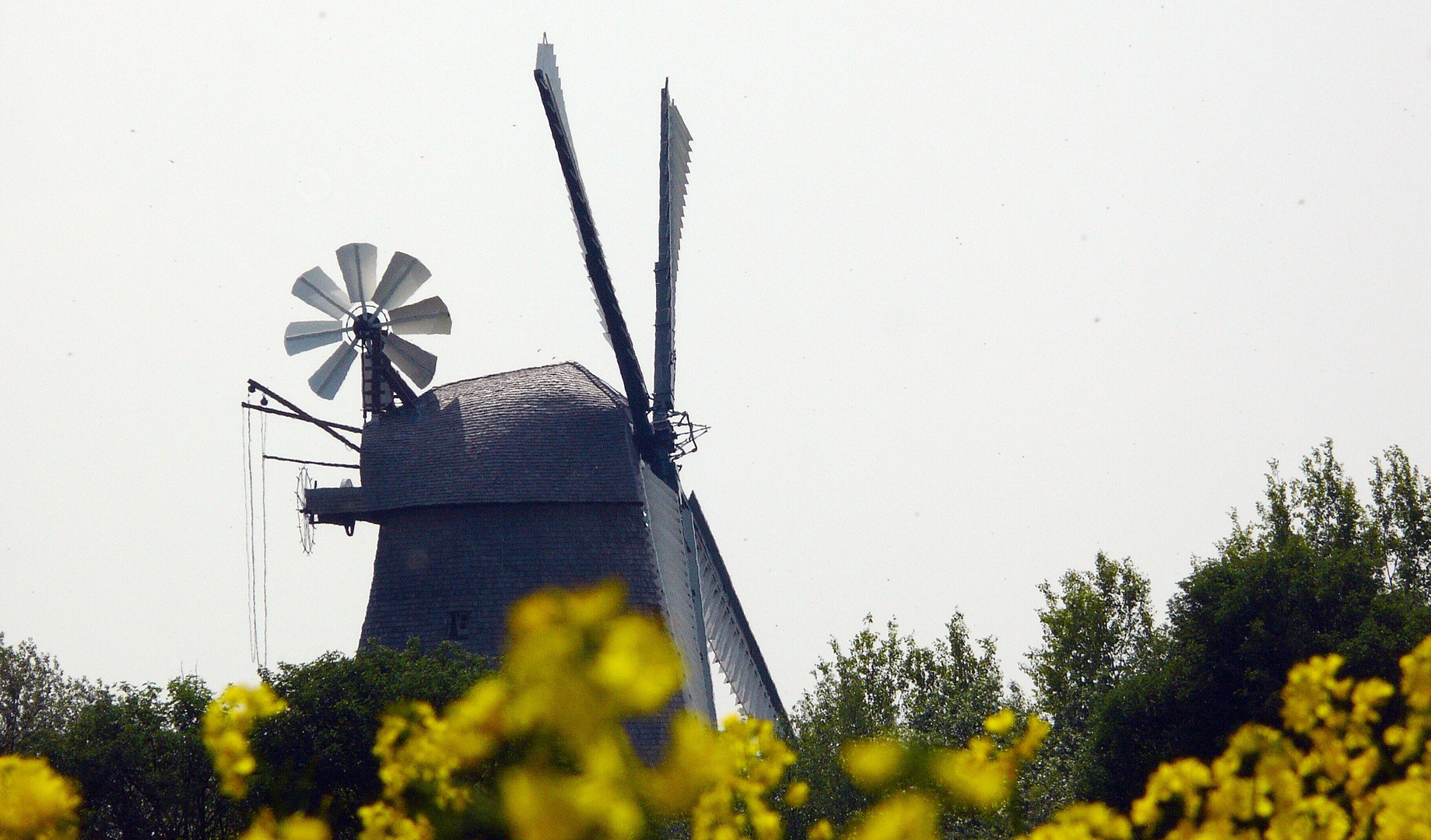 Windmühle in Exter (OWL) # 1