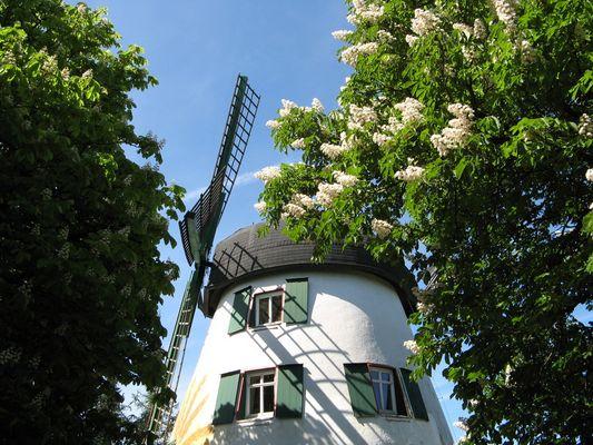 Windmühle in Fissenknick