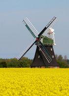 Windmühle in Rövershagen/MVP