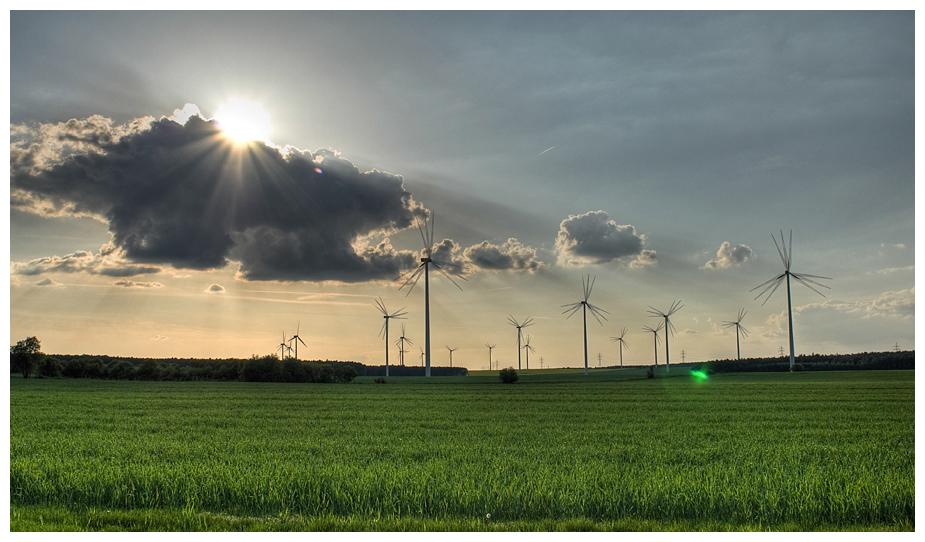 Windmühlenwald in Südbrandenburg