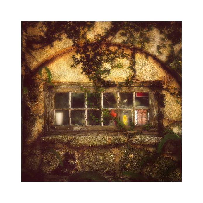 Window and Coquina