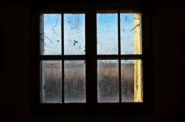 Window on the Nature