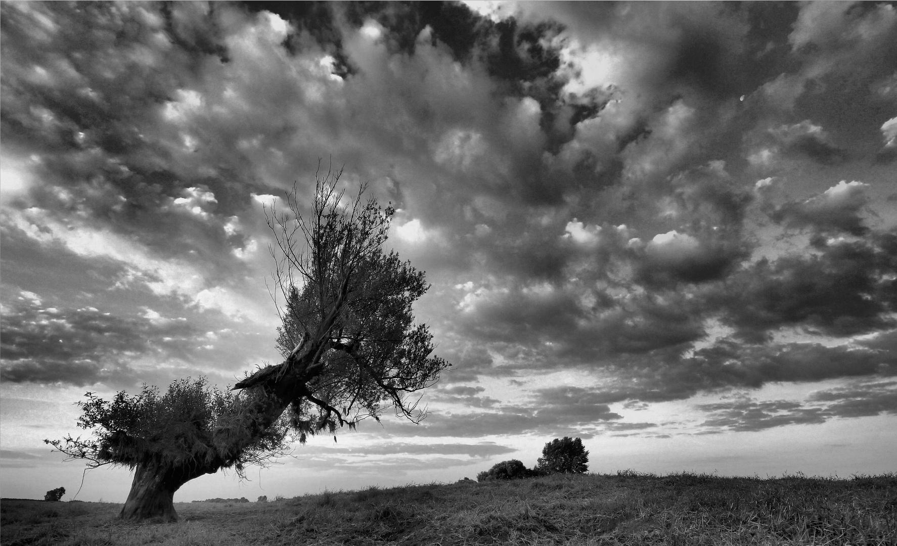 windschief...