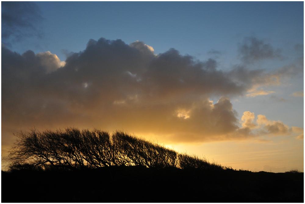 Windschurbäume / Spiekeroog 12/2011