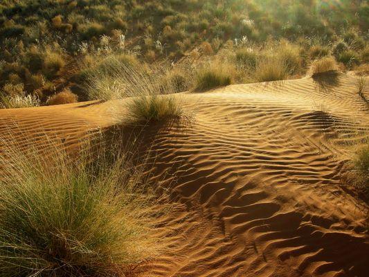 Windspiel in Namibia