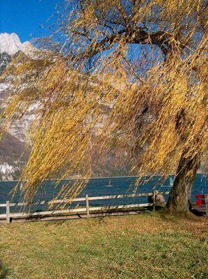Windsurfen und trauen um die letzte Farbe des Herbsts - 23 Nov. 2003 (auch 1280 pix)