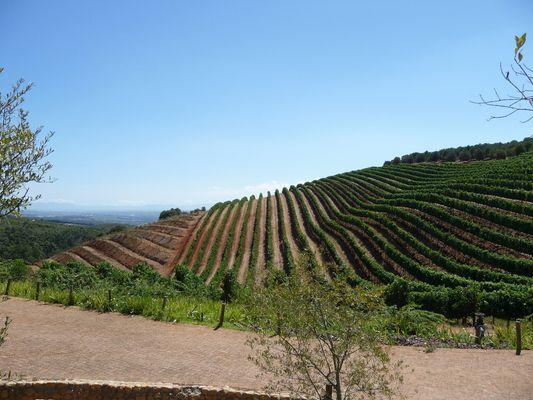 Winelands near Cape Town