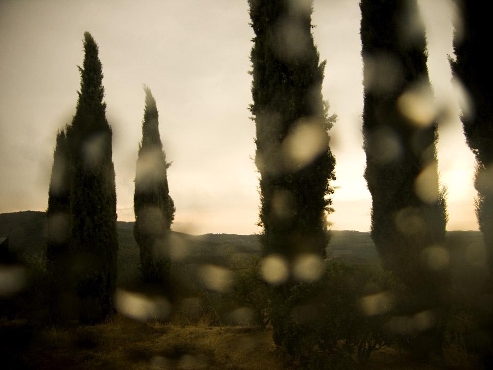 Wineyard in Chianti.