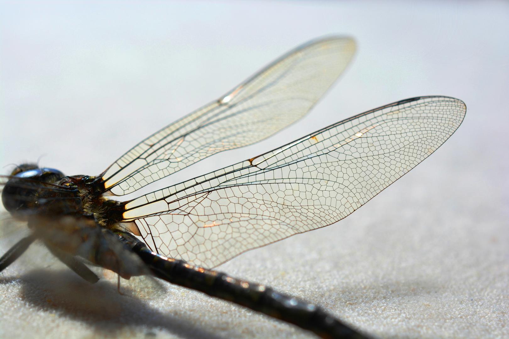 ...wing...