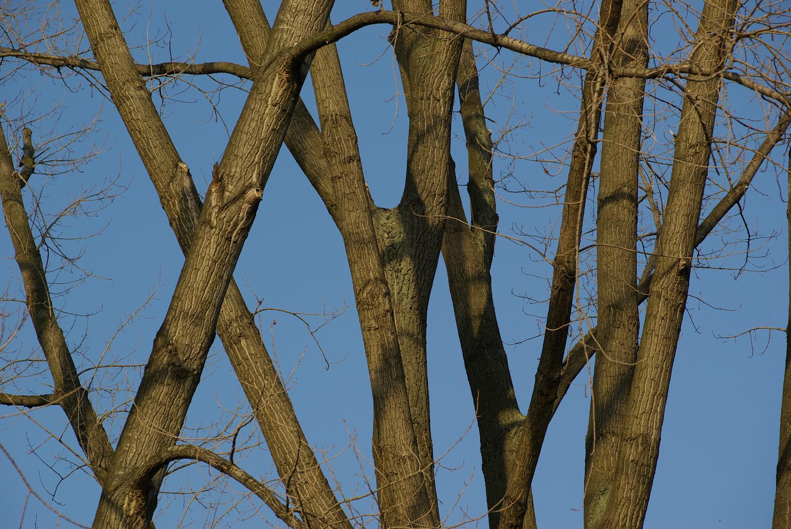 Winkelbäume