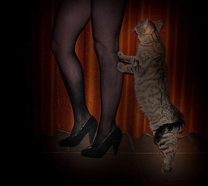 Winnie Winzling will auch in Cabaret mitspielen