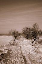 Winter -1-