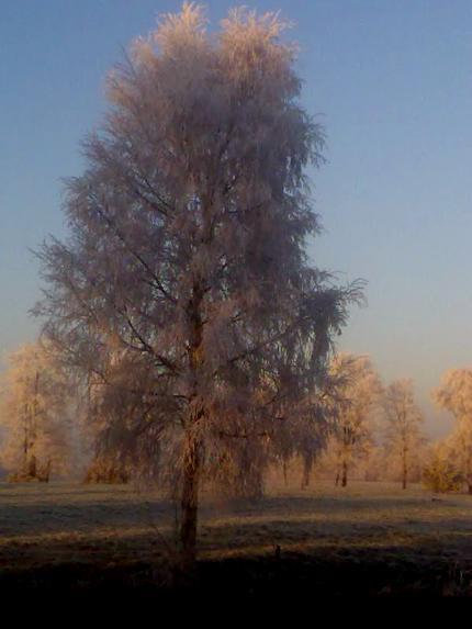 Winter 2007/08