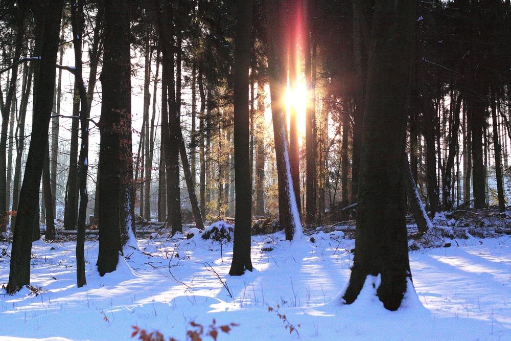 Winter 2009 (15)