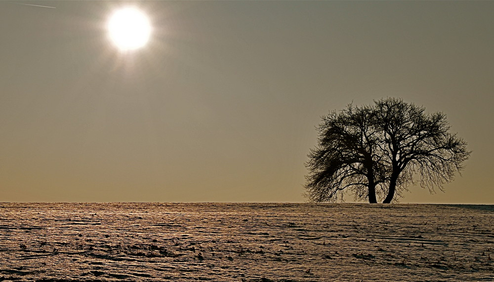 Winter 2009 III