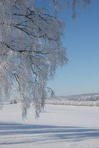 Winter -21 °C
