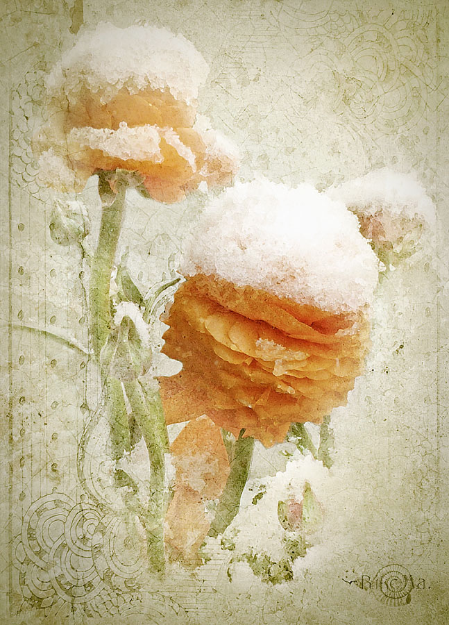 … Winter