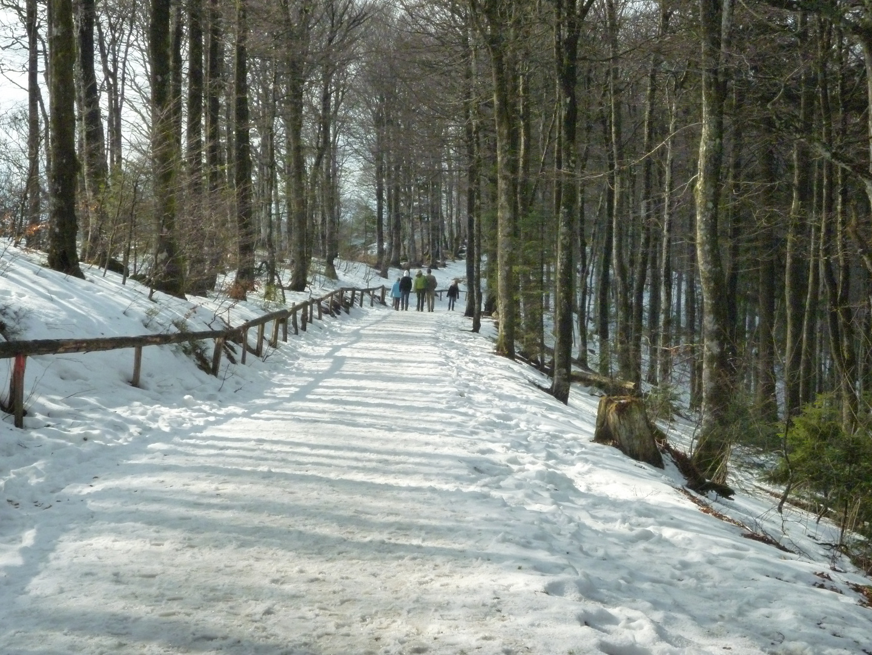 *** Winter ***