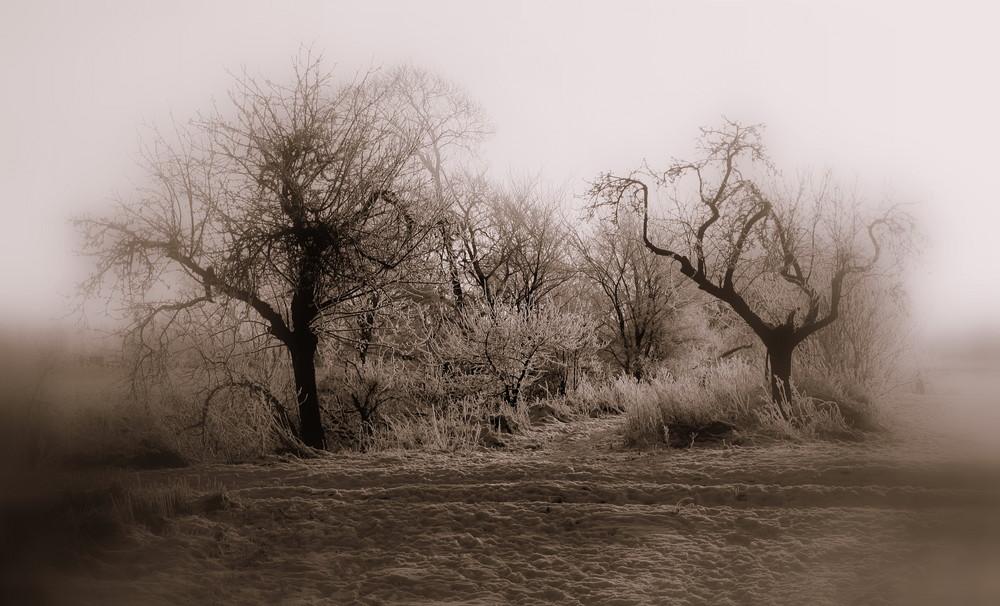 Winter -5-