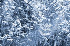 Winter # 7184
