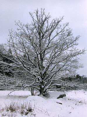 Winter!!!!!