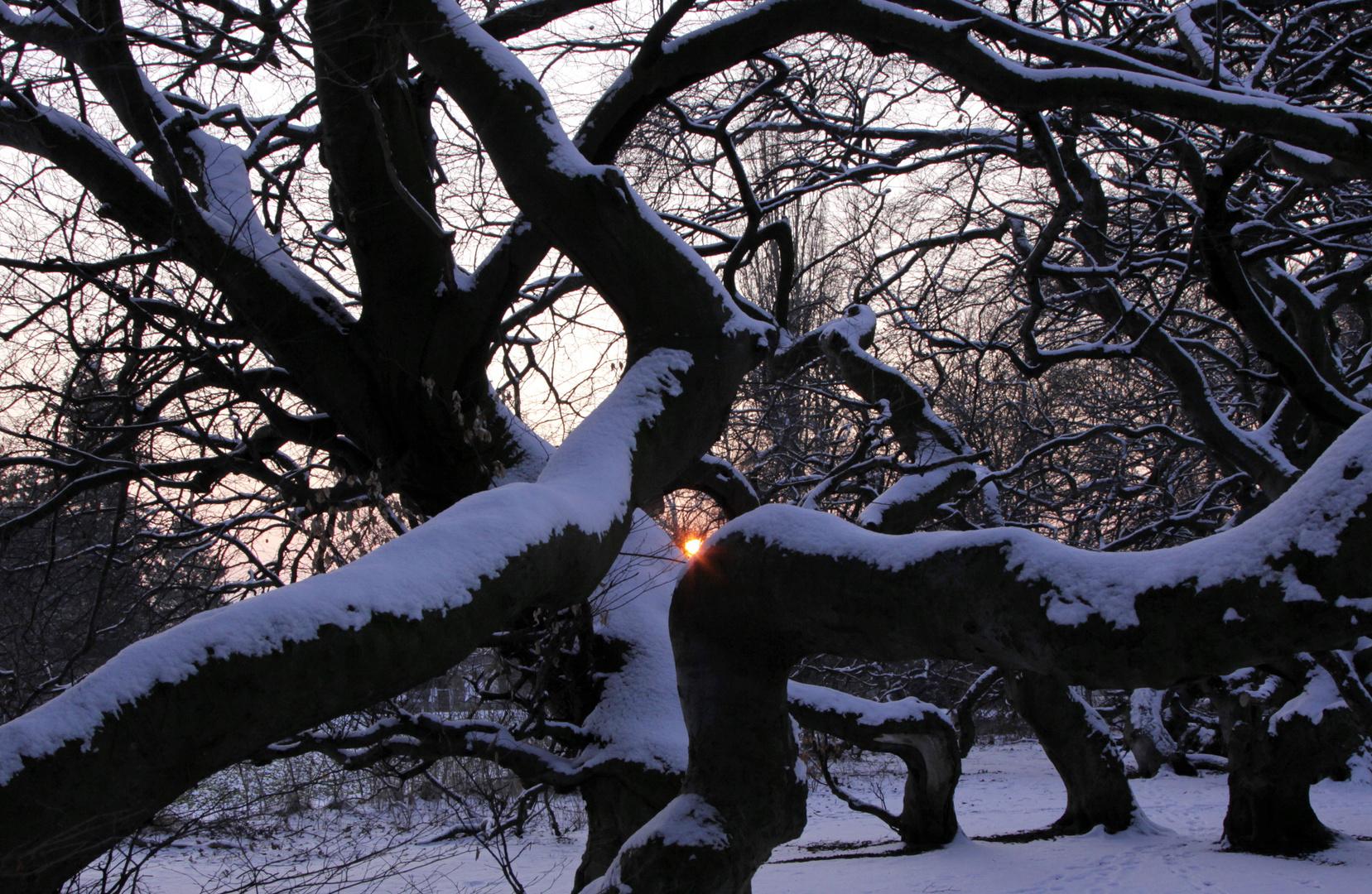 winter ade 2