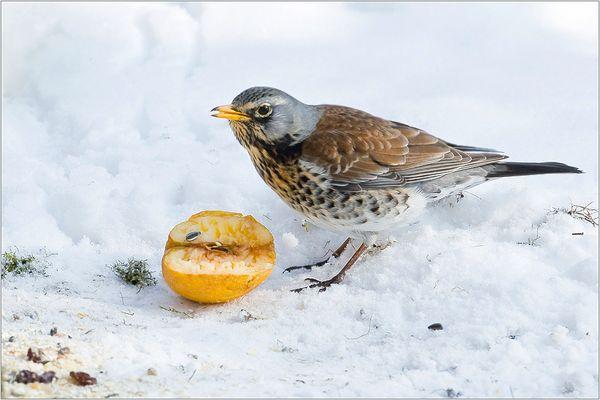 Winter ade - alles muß raus! [3]