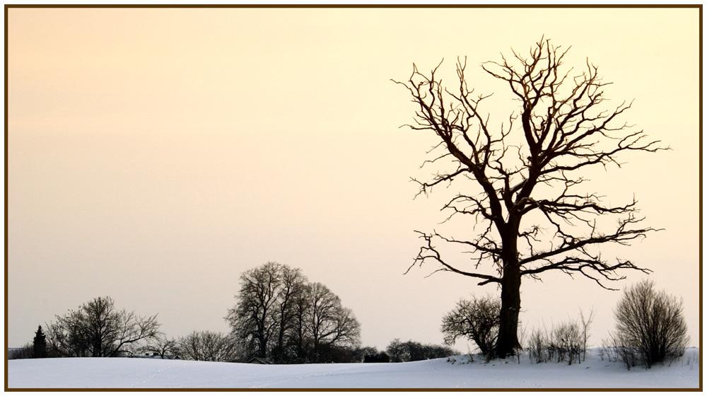 Winter afternoon - Winternachmittag 1