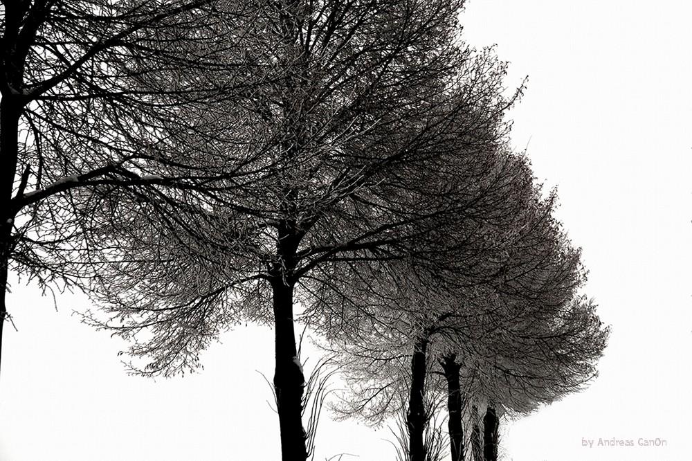 Winter Allee