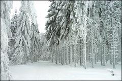 Winter am Albrechtsberg 4