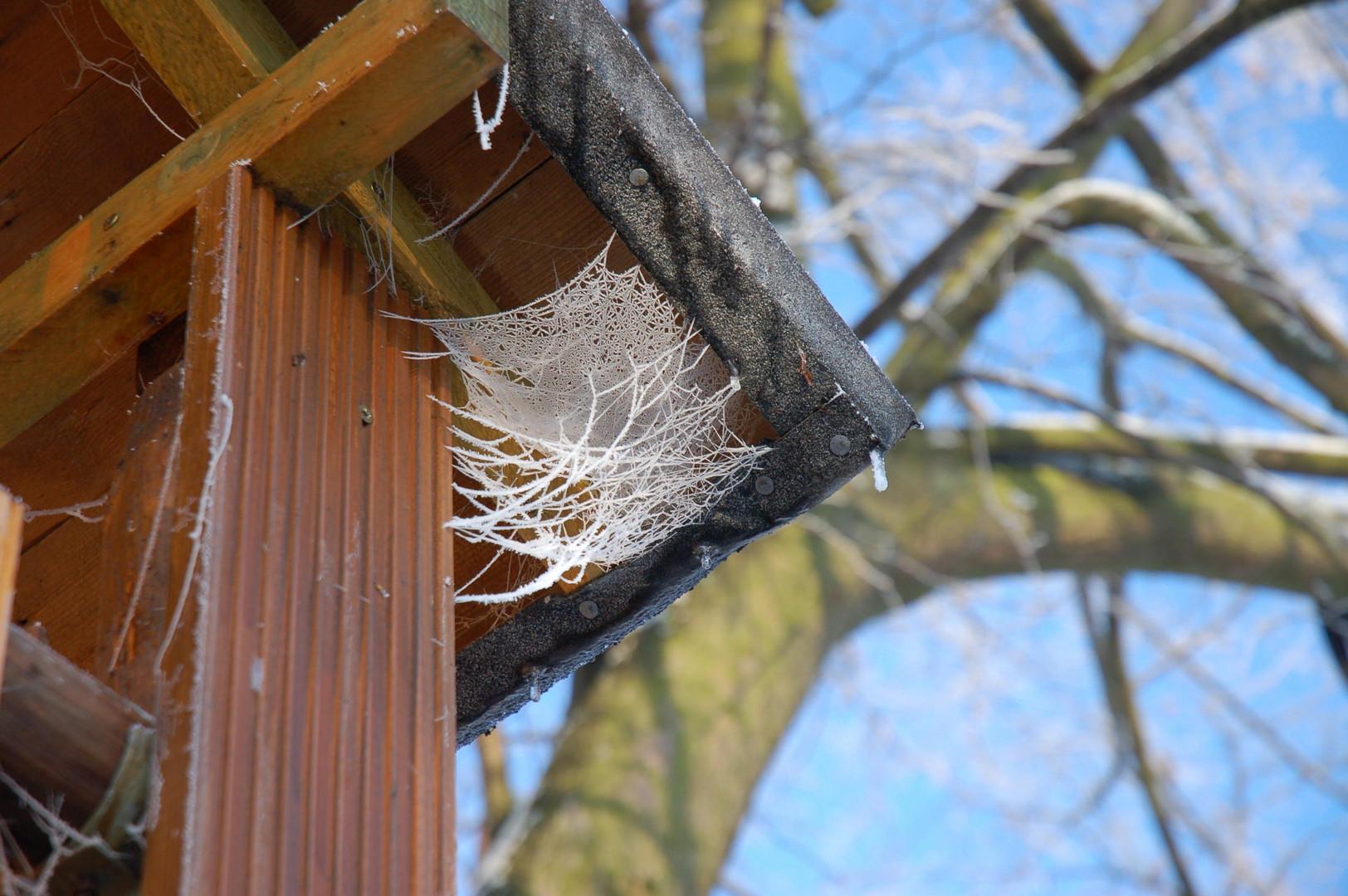 Winter am Baumhaus