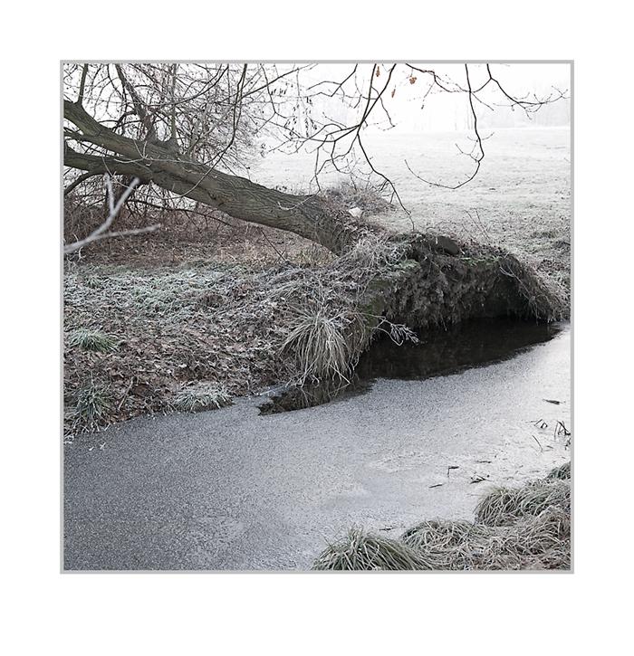 Winter am Birkenbach.