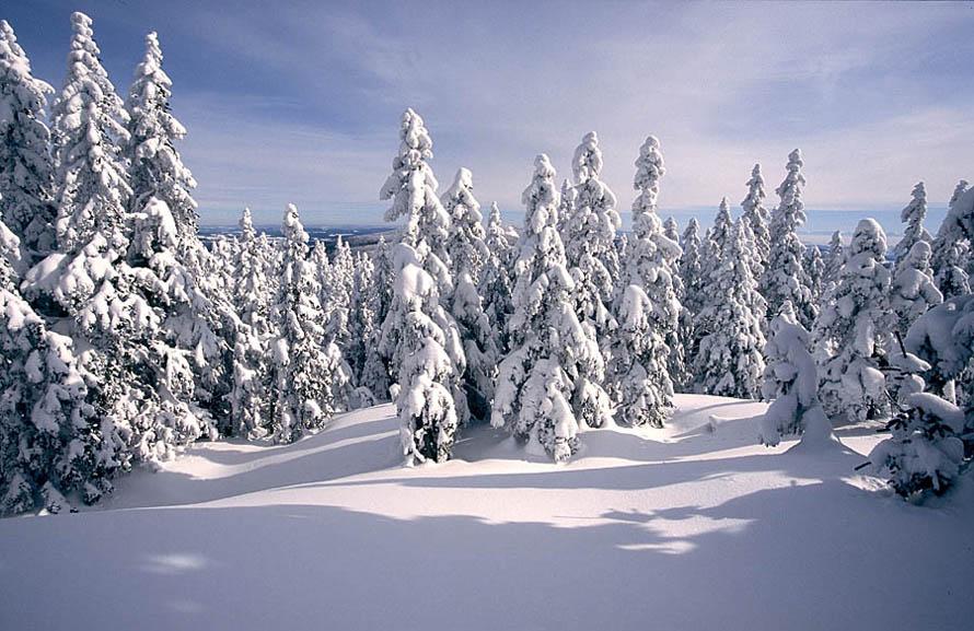 Winter am Dreisesselkamm