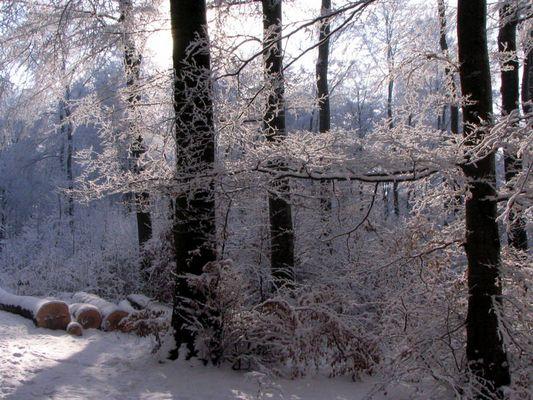 Winter am Egelsee 2