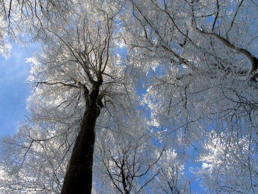 Winter am Egelsee 3