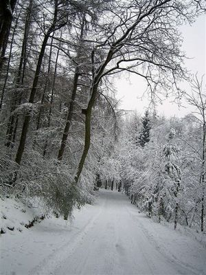 Winter am Hammberg