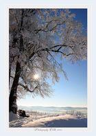 Winter am Hohenstaufen 01