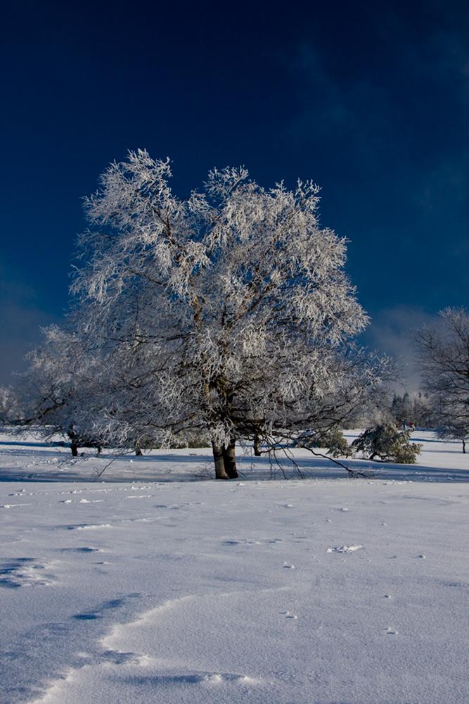 Winter am Kahlen Asten